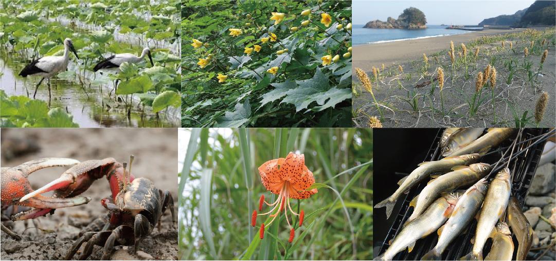 森林:春菊・昆虫・動物・アサリ・サンゴ礁